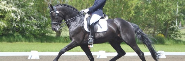 Dressage competition tips From Jess Wilson rider of Santo Hit