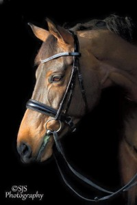 Smooth Grand Prix Santo Bridle by Wolds Exclusive Bling