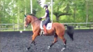 Anna Jesty one of our Dressage Ambassadors in training see the exercises she does with her favorite motivational quotes!