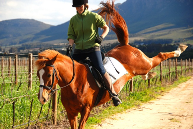 Problem horses and behavioural issues