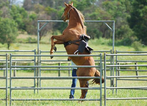 naughty horses
