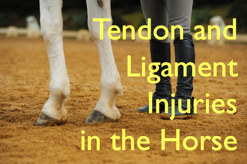 Tendon Injuries in the horse