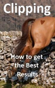 Are you clipping your horse ? here are some top tips!