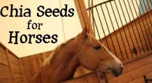 chia for horses