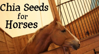 What Chia can do for your horse!