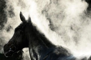 steaming horse