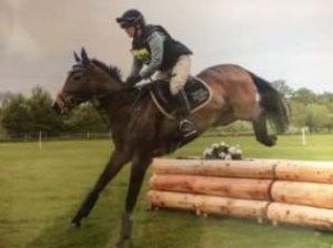 Find out what Lisa @Guildhouse Sports Horses has been up to!