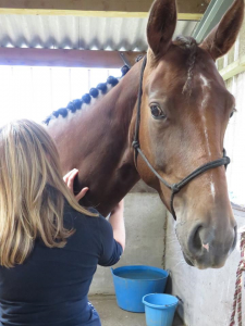 Back Pain in Horses : By Mel Betts, McTimoney Animal Practitioner