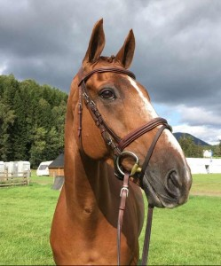 Sad to hear of the loss of HHS Dassett Appeal after Blair CCI***