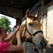More about Massage for your Horse
