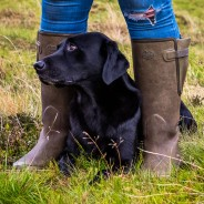 Horse & Dog Photographer UK –