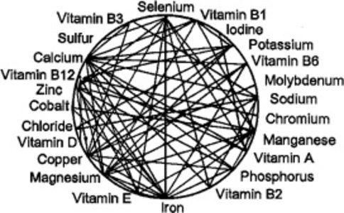vitamin and minerals for horses