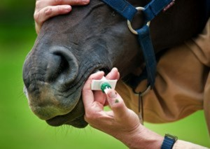Two Rivers Veterinary Practice tell us about targeted worm control for horses -Part 1
