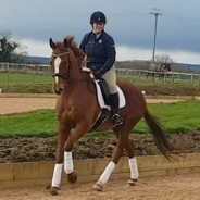 Anyone Can Whistle – The ex racehorse who has turned his hoof to most things!
