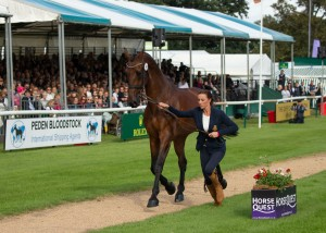 Equine Fashion Icon Dee Kennedy Returns to Burghley this year with Chequers Playboy