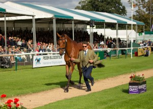 Simon Grieve runs The Rutman over his first CCI5*L at Burghley 2019