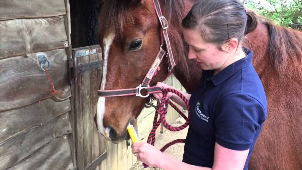Two Rivers Vets – Targeted Worming Control For Horses ( Part 2 )