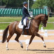 MAXIMISING YOUR MARKS IN A DRESSAGE TEST