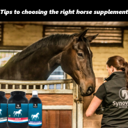 7 things to know when choosing your horses supplements.