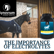 Importance of Electrolytes in horses