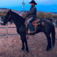 Timothy Showe – The Horse Market in USA