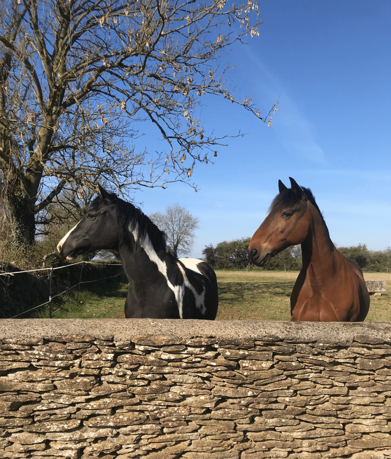 Fibre and Fructans; The Keyflow Guide to Managing Laminitis