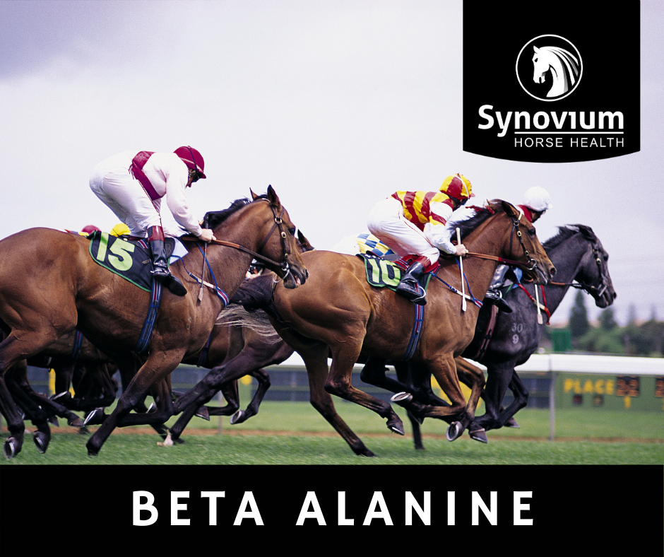 Beta – Alanine? What is it and why feed it?