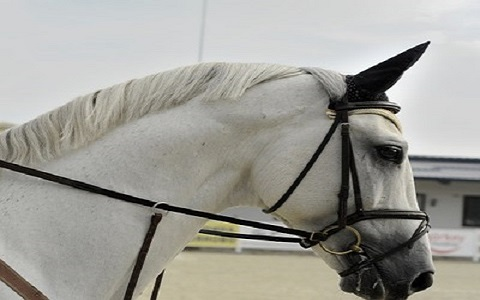 When to supplement for vitamin and mineral deficiencies in your horse