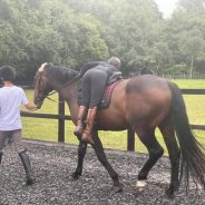 Breaking and Backing of Horses – A note to all…..